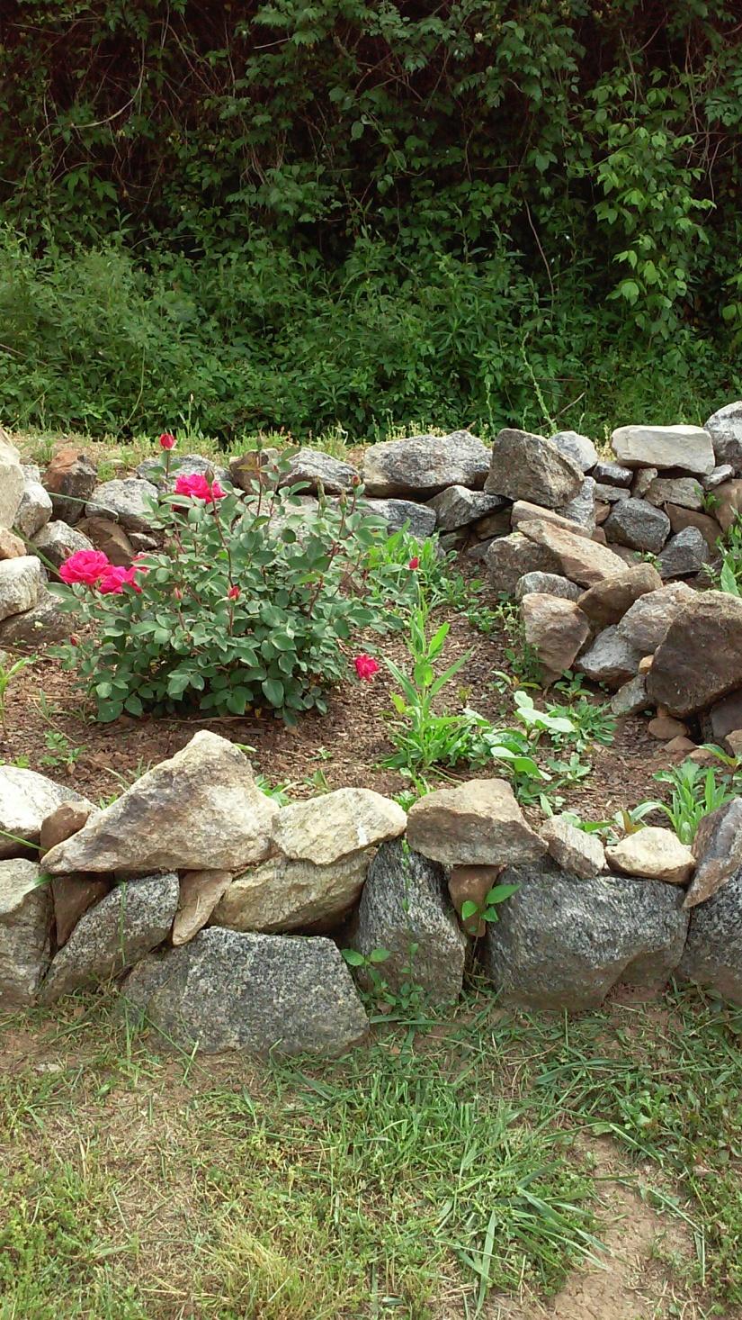 Weed Garden Update